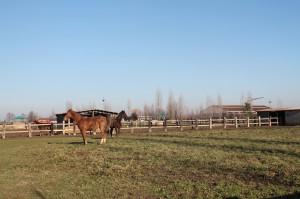 uno due tre stalla 12014 054